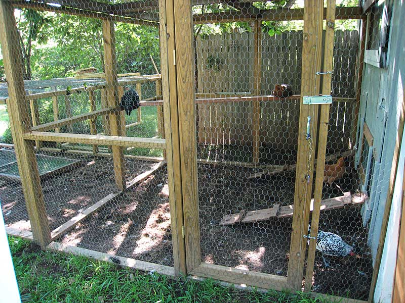 Confined hens in an outdoor coop